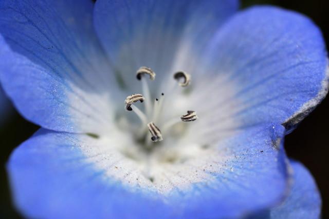 小さく可憐な花