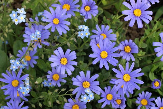 大きな花に小さな花がくっついて